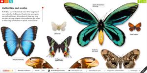 dkbutterflies