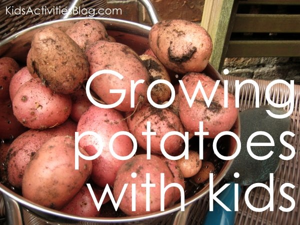 growing potatoes with children